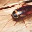 απεντόμωση κατσαρίδας - απεντομώσεις αθήνα