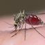 απεντόμωση κουνούπια - κουνουποκτονία αθήνα