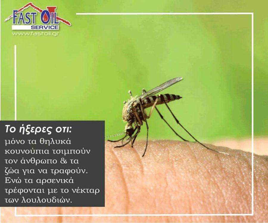 Απεντόμωηση-Κουνούπια