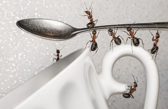Μυρμήγκια στην κουζίνα;
