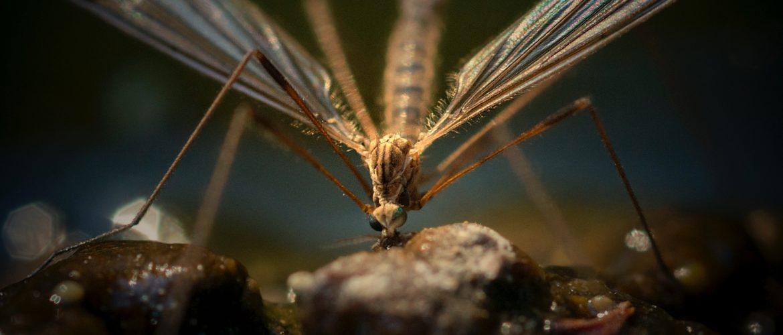 απεντόμωση για κουνούπια -κουνουποκτονία